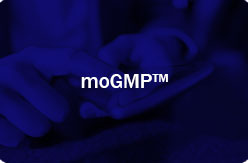 10moGMP-link